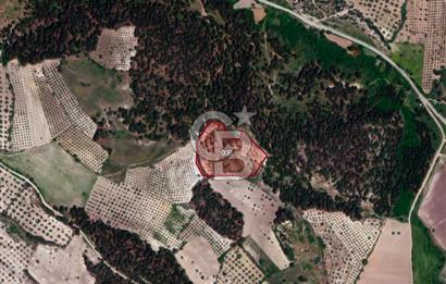 MANİSA ŞEHZADELER'DE 12.800 m2 SATILIK FIRSAT TARLA