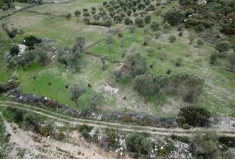 İzmir Karaburun Eğlenhoca da Doğa İle İç İçe Zeytinlik