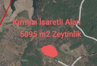 KEMALPAŞA SAVANDA GÖLETİ YANINDA 5095 M2 TARLA