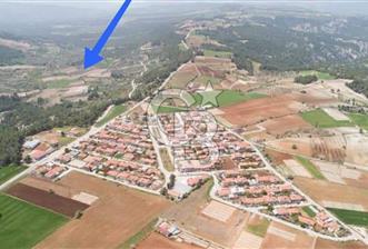 Kale Çamlarca Mahallesi 8.600 m2 Satılık Zeytinlik